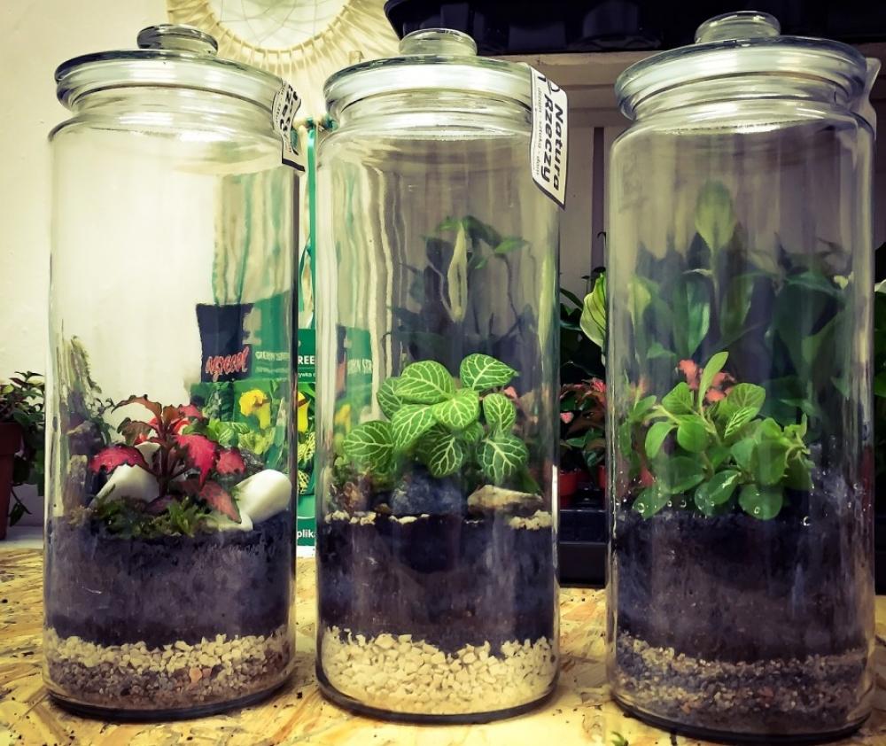 Для флорариумов используют самые разные стеклянные сосуды - вазы, банки, бутылки, мензурки.