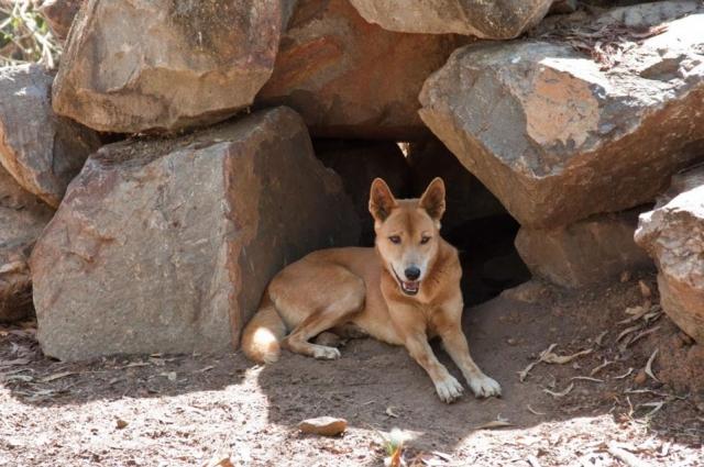 Пёс Рыжий - полноправный сотрудник музея.