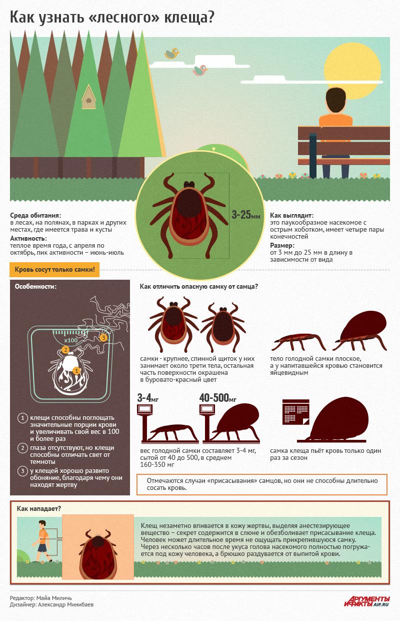 Как узнать лесного клеща. Инфографика