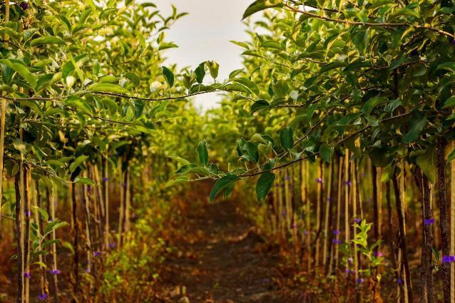 Продукция предприятия нужна и крупным хозяйствам, и личным подсобным.