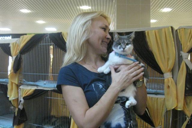 выставка кошек, пристройство котов