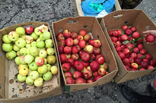 Не секрет, что глянцевые на вид яблоки покрывают специальным составом, который предотвращает их гниение.