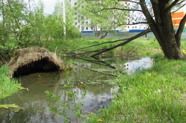 Вот так выглядит ручей Голубка в тех местах, где он остался нетронутым.