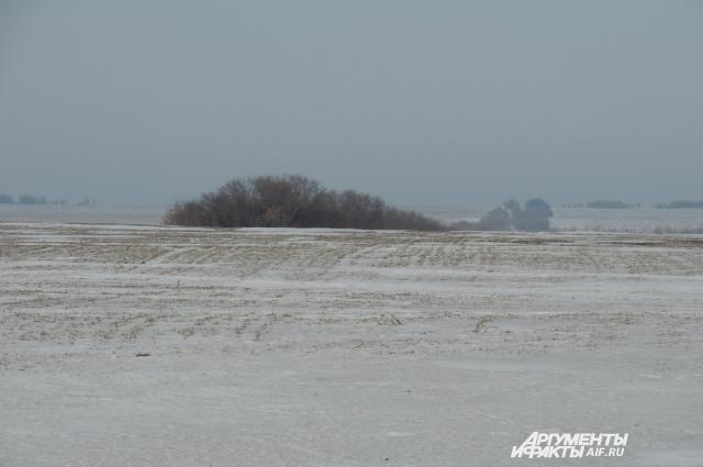 При высоте снежного покрова не выше шести сантиметров или полном его отсутствии может погибнуть большая часть озимой пшеницы.