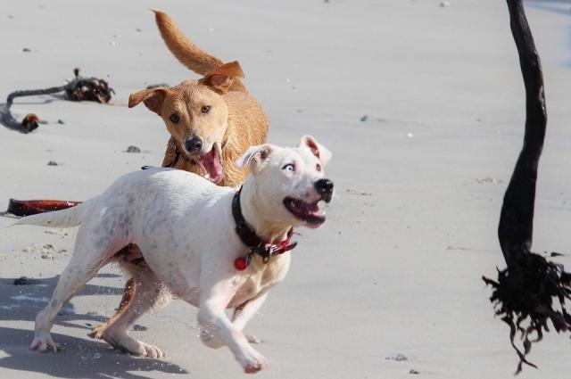 Постарайтесь, чтобы вместо вас, собака укусила шарф или сумку, которые заранее вытяните перед собой.