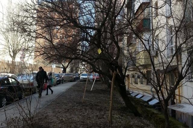 В Ростове за СКАГСом: чтобы ветки на этих деревьях не обломились, им поставили подпорки.