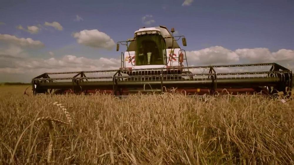 На поля вышли сразу четыре новых «Торума». Новый модернизированный комбайн донского производителя очень выручил сальских хлеборобов.