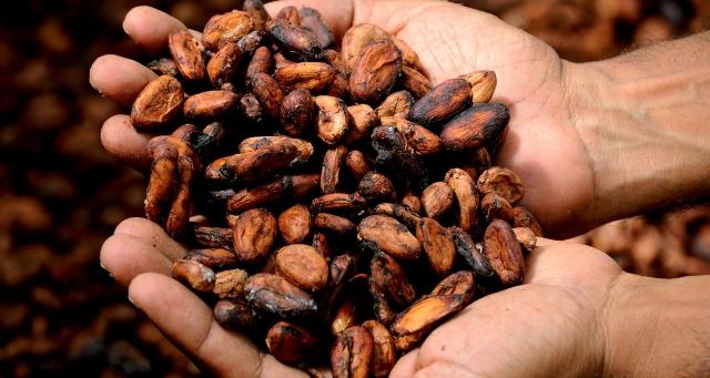 Задолго до того, как нефть стали называть «черным золотом» этот титул носили какао-бобы и производимый из них шоколадный напиток.
