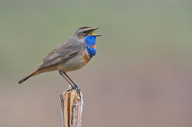 Птиц снимать тяжело, но интересно.