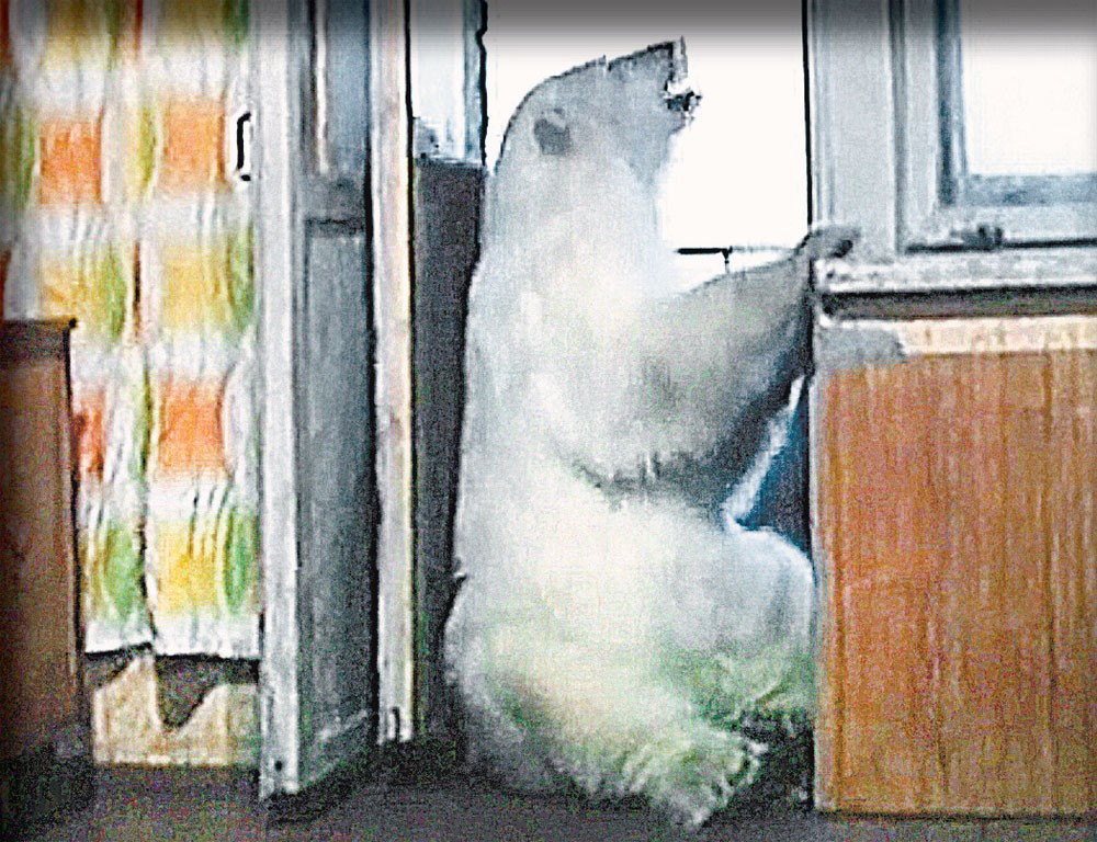 Айка научилась лапой открывать и закрывать балконную дверь - выходила туда гулять.