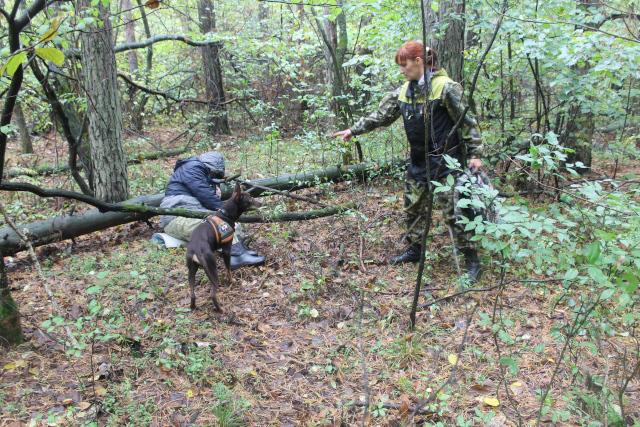 Собака находит человека в глубине леса