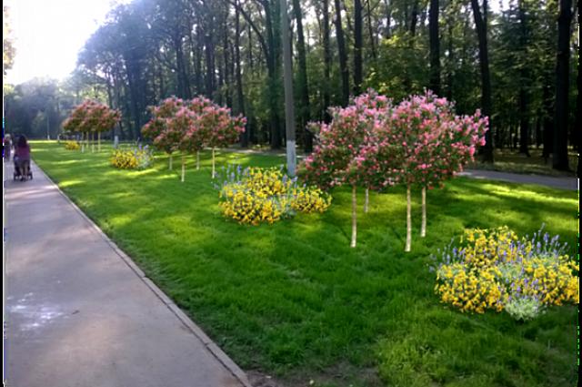 Новые композиции из кустарников и цветов.