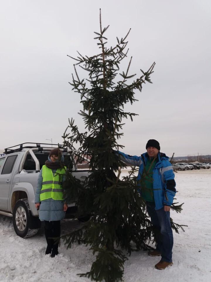 Самая большая домашняя елка Уфы тоже отправится на переработку