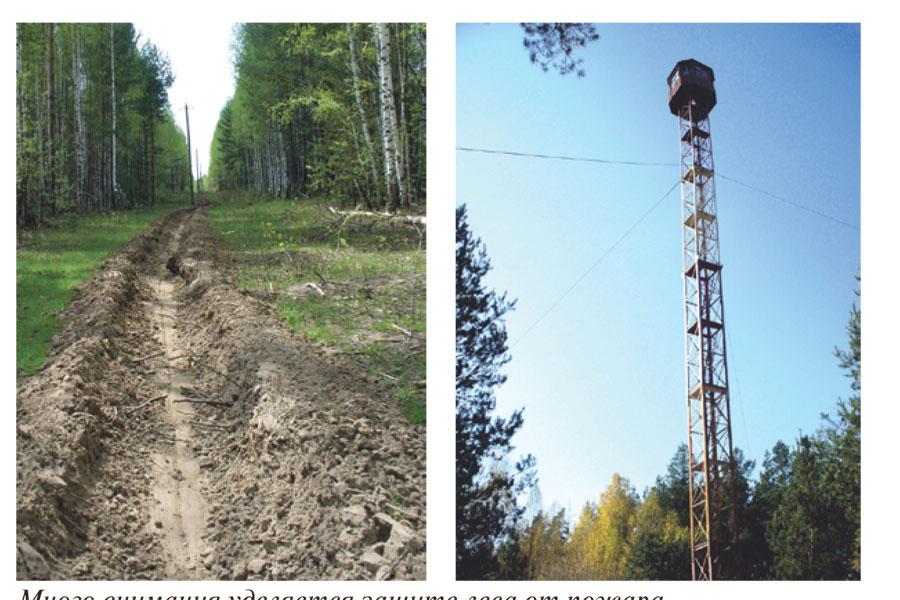 Много внимания уделяется защите леса от пожара.
