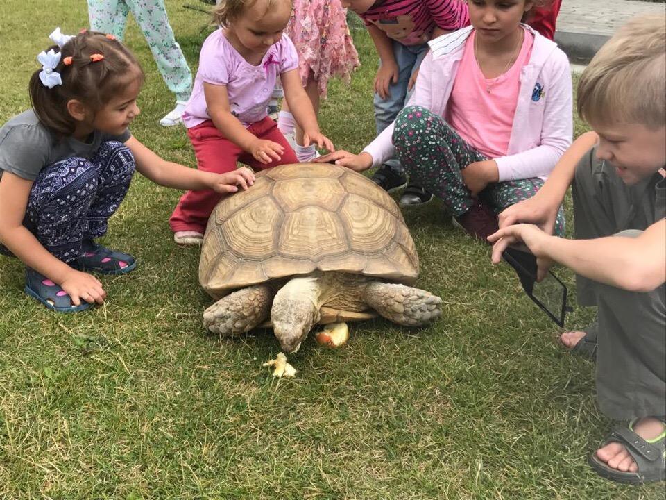 Звезда экопарка на Правобережье черепаха Тортилла