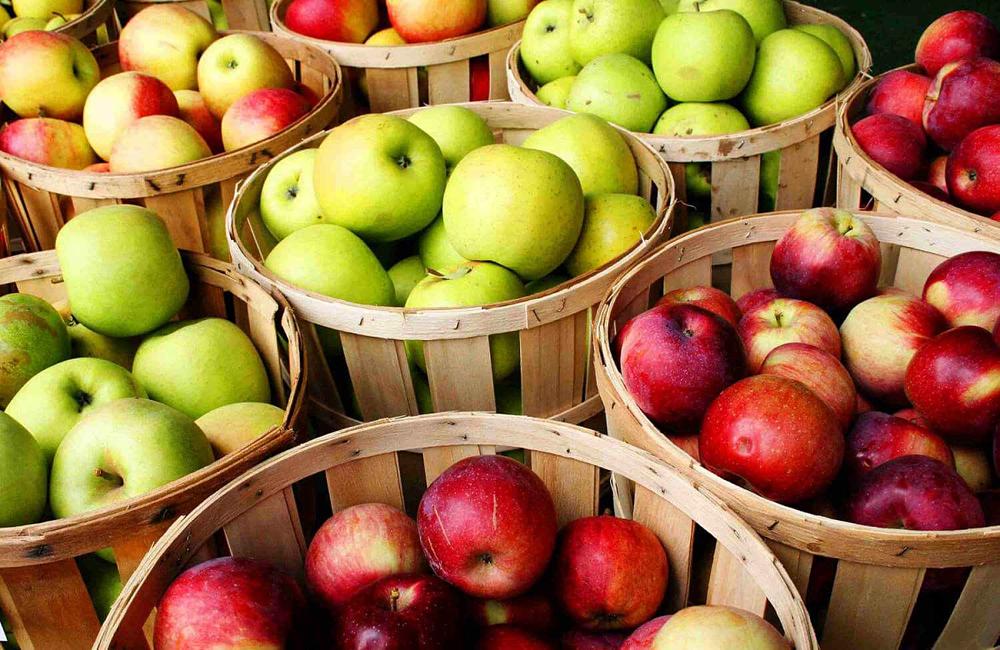 Мичуринские яблоки.