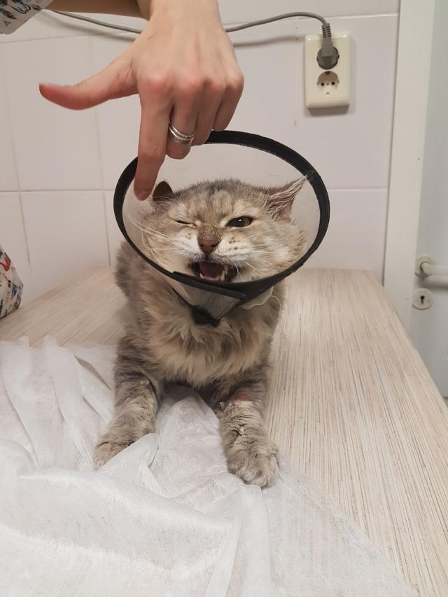 Волонтеры отвезли животных в ветеринарную клинику.