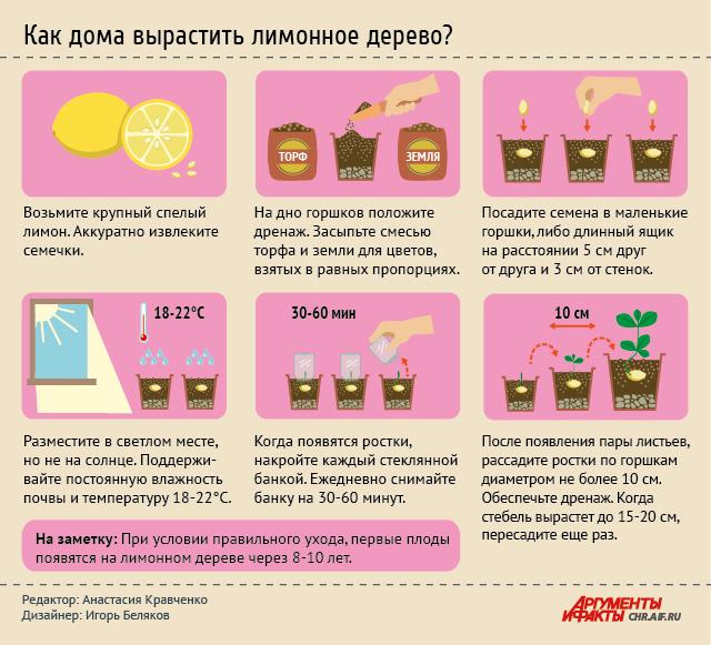 Как вырастить лимонное дерево. Инфографика