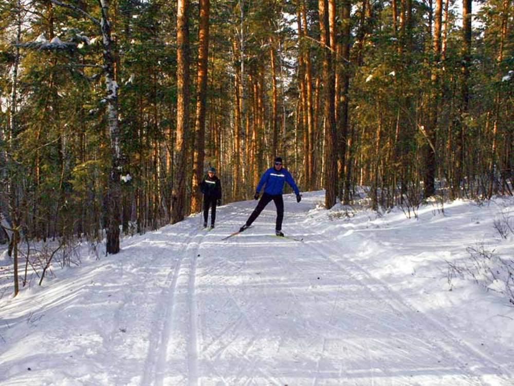 Лыжероллерная трасса проходит по живописному лесу.