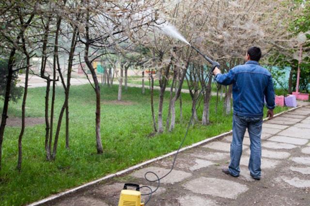Борьба с горностаевой молью в Иркутске