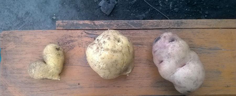 Картошка с фантазией.