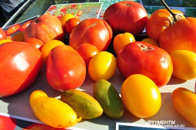 Любовь к томатам в семье Андерсена - это семейное.