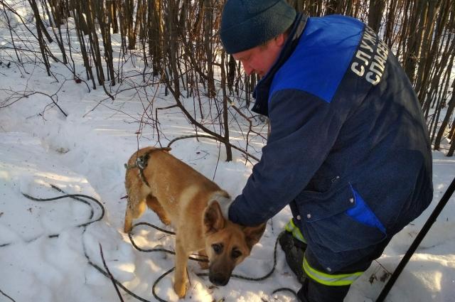 Достать собаку смогли с помощью верёвок и специальной петли.
