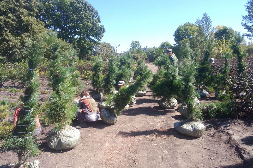 Молодых деревьев много - выбирай на вкус!