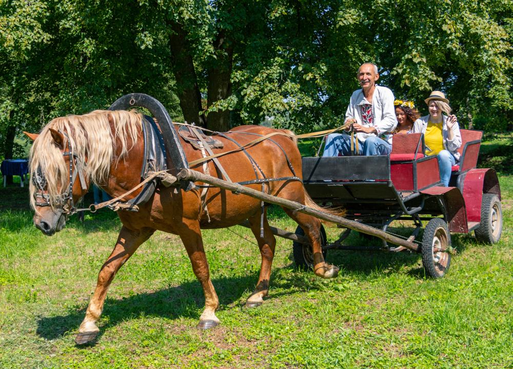 На территории усадьбы гости также могут испытать сельский транспорт.