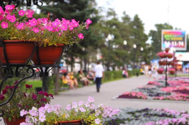 Петуньи уже несколько лет являются летним символом города.