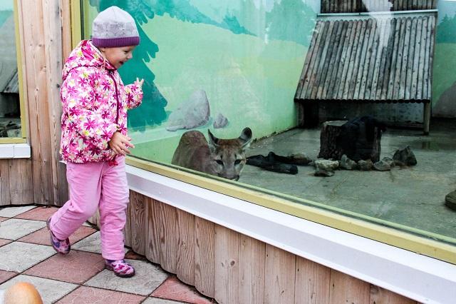 Для многих родителей зоопарк — одно из любимейших мест отдыха с детьми.