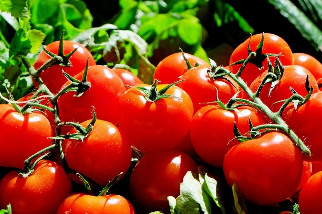 Тепличные томаты ещё можно попытаться спасти от грибка.