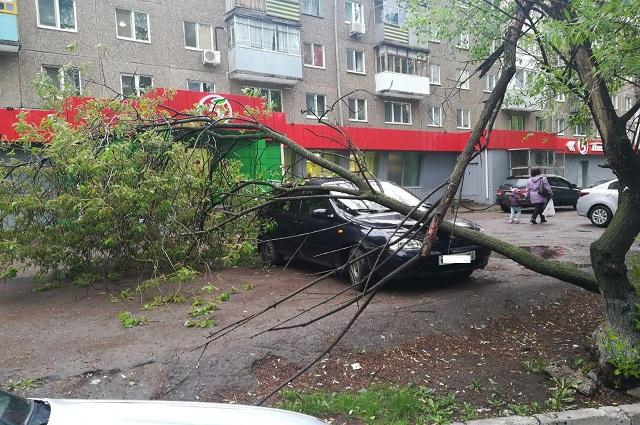 Деревья на машины