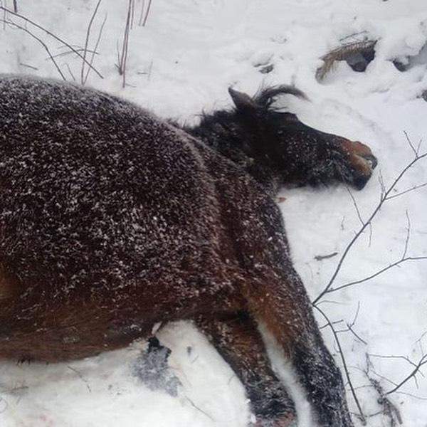 Лошадь погибла
