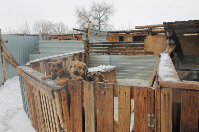 Бродячих животных нужно помещать в спецприёмники и потом по возможности пристраивать, но пока такого количества приютов в России нет.