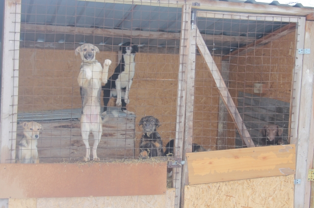 В бюджете области на реализацию мер по отлову бездомных животных предусмотрено более 15,5 млн рублей.