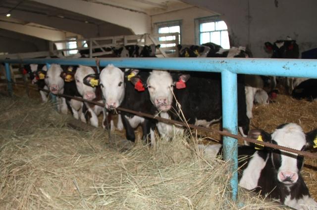 На 2% увеличилось производство мяса, сохранилось на прежнем уровне производство молока.