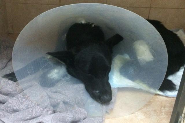 За животным ухаживают ветеринары и волонтеры.