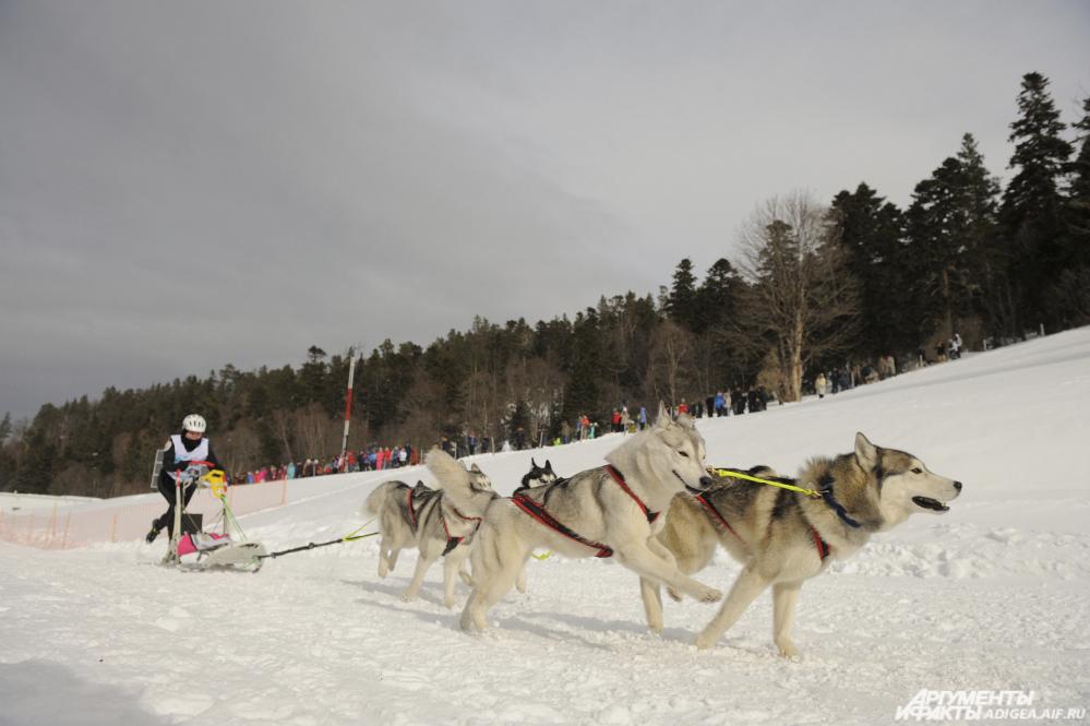 гонки на собачьих упряжках, Хаски, Лагонаки