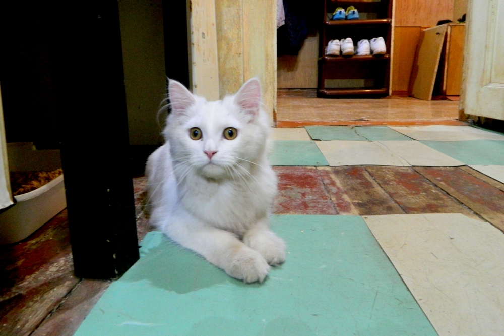 В квартире даже появился свой кот, назвали Колей. Он самостоятельно забрался в окно и с тех пор является полноправным обитателем известной квартиры.