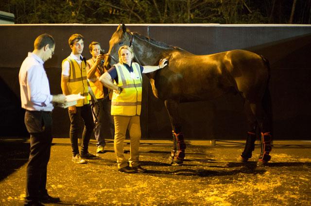 Фото: Международная федерация конного спорта.