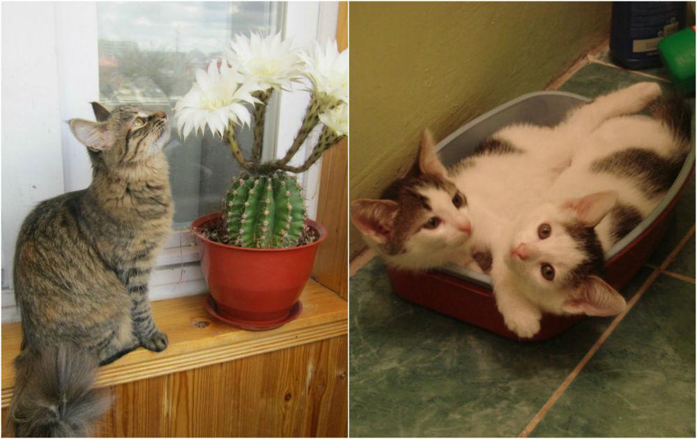 Кошачье счастье и... блаженство.