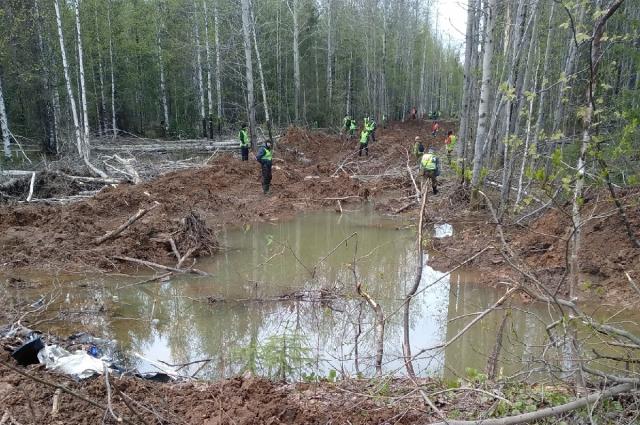 Волонтёры обследовали большую территорию в лесу.