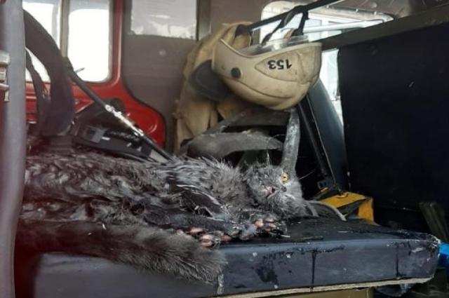 Справившись с огнём, пожарные нашли под кухонным гарнитуром испуганного и, как они сказали, «закопчённого» кота.