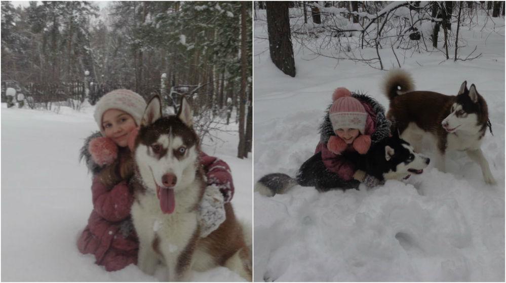 «Хаски самые добрые собаки».