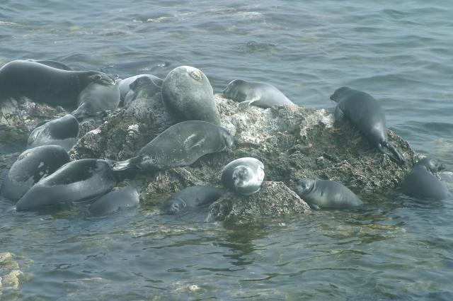 5 тысяч особей можно добывать без вреда экосистеме.