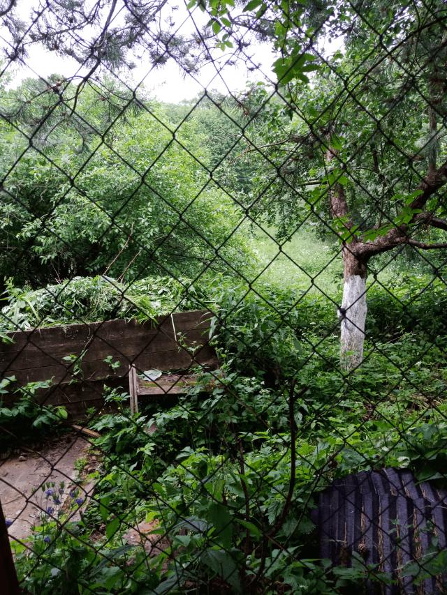 Если заучастком поле или лес– ждите насекомых.