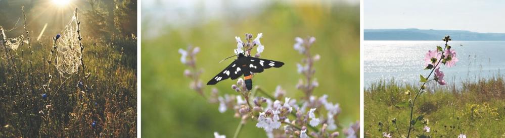 Находясь на природе, снимая бабочек, цветы, воду и паутину, наш фотограф всё время пребывает в состоянии мира и гармонии.