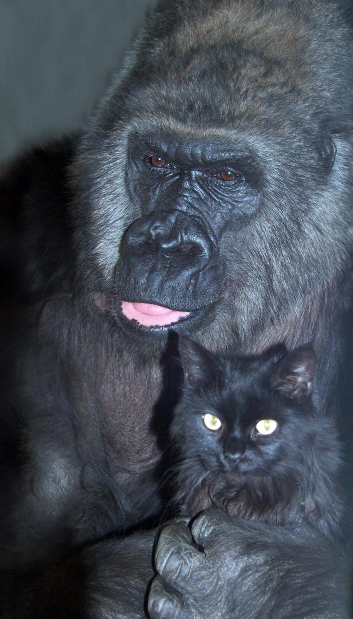 обезьяна Мотя и кот