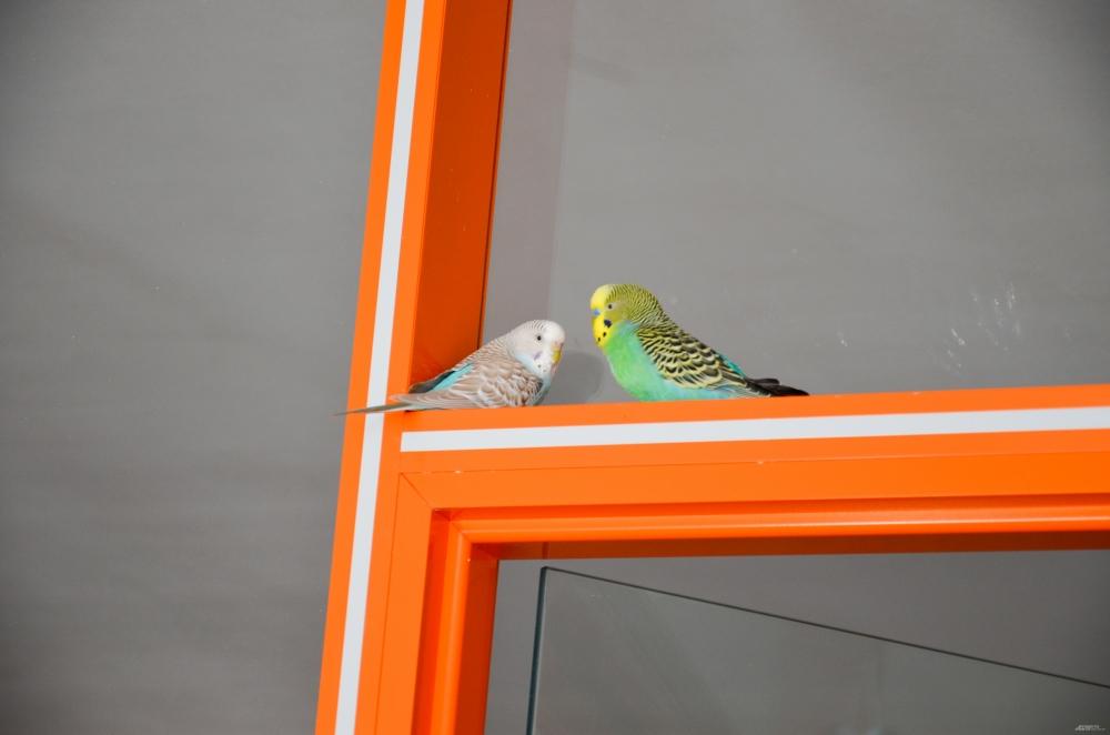 Пока попугаи – единственные обитатели игровой комнаты. Обычно здесь занимаются группы дневного пребывания, но их работа временно приостановлена.